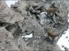 arete-haut-alpine-2007-04-29-03