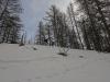 Ski dans le mélèzin.
