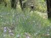 arete-haut-alpine-2007-05-29-02