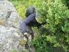 arete-haut-alpine-2007-06-02-01