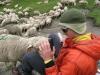 arete-haut-alpine-2007-06-12-03