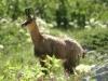 arete-haut-alpine-2007-06-27-28-portage-13
