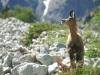 arete-haut-alpine-2007-06-27-28-portage-14